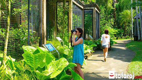باغ پرندگان جورونگ