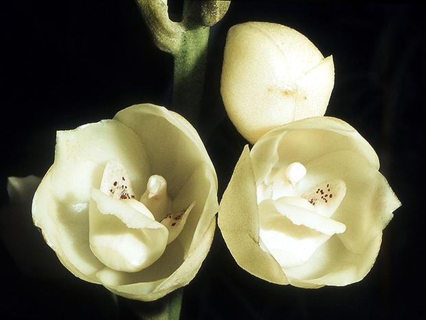 گل زیبا شبیه به پرنده