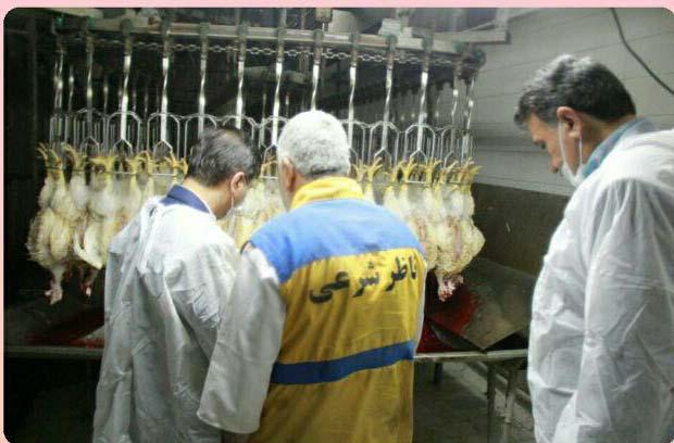 بازدید فرماندار و اعضاء ستاد تنظیم بازار شهرستان گرگان از کشتارگاه طیور