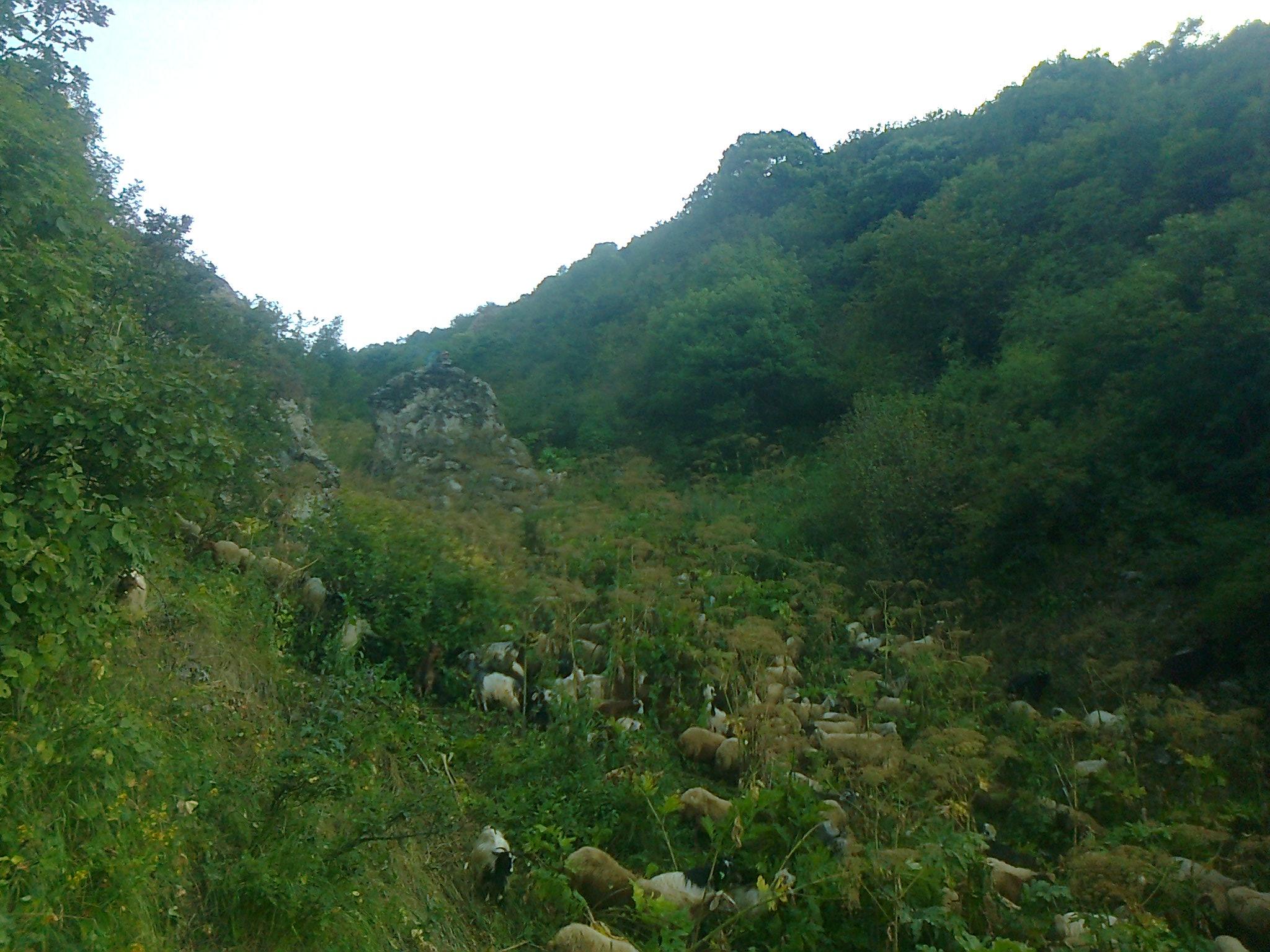 زبیعت روستای کلاثور