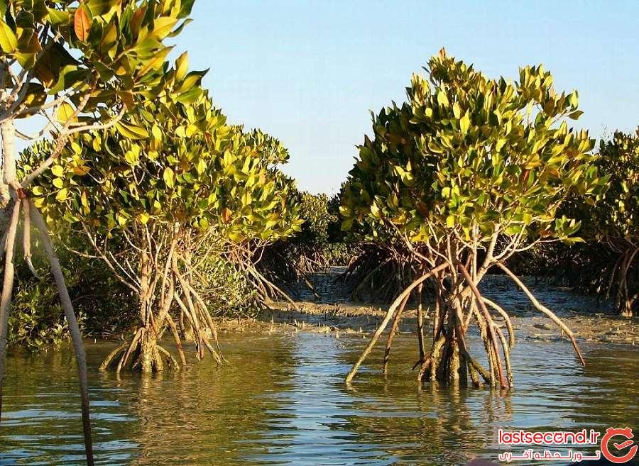 جنگل حرا Mangrove forest