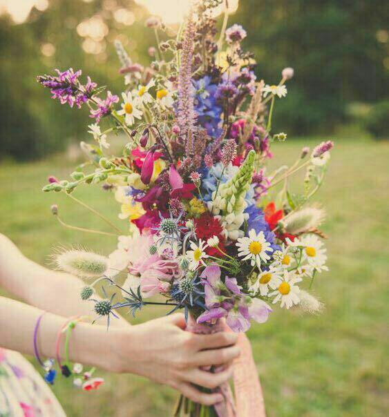 عکس گل زیبا