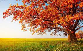 جشن میانه پاییز