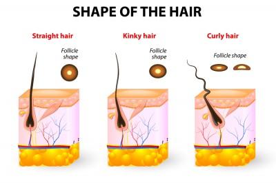 [عکس: y2c5_types-of-hair-e1401219786985.jpg]