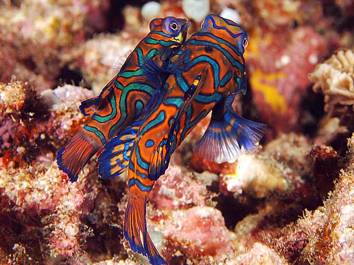 عکس از جفتگیری ماهی ها