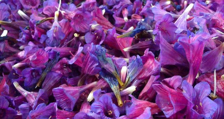 گل گاوزبان و خواص درمانی آن