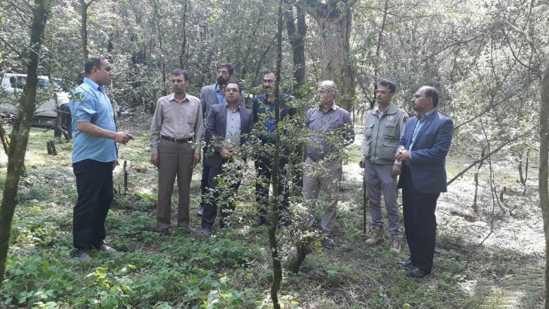 بازدید مدیرکل دفتر حفاظت و حمایت سازمان جنگلها، مراتع و آبخیزداری کشور از اقدامات برنامه حفاظتی و اجرایی نجات شمشاد استان گلستان