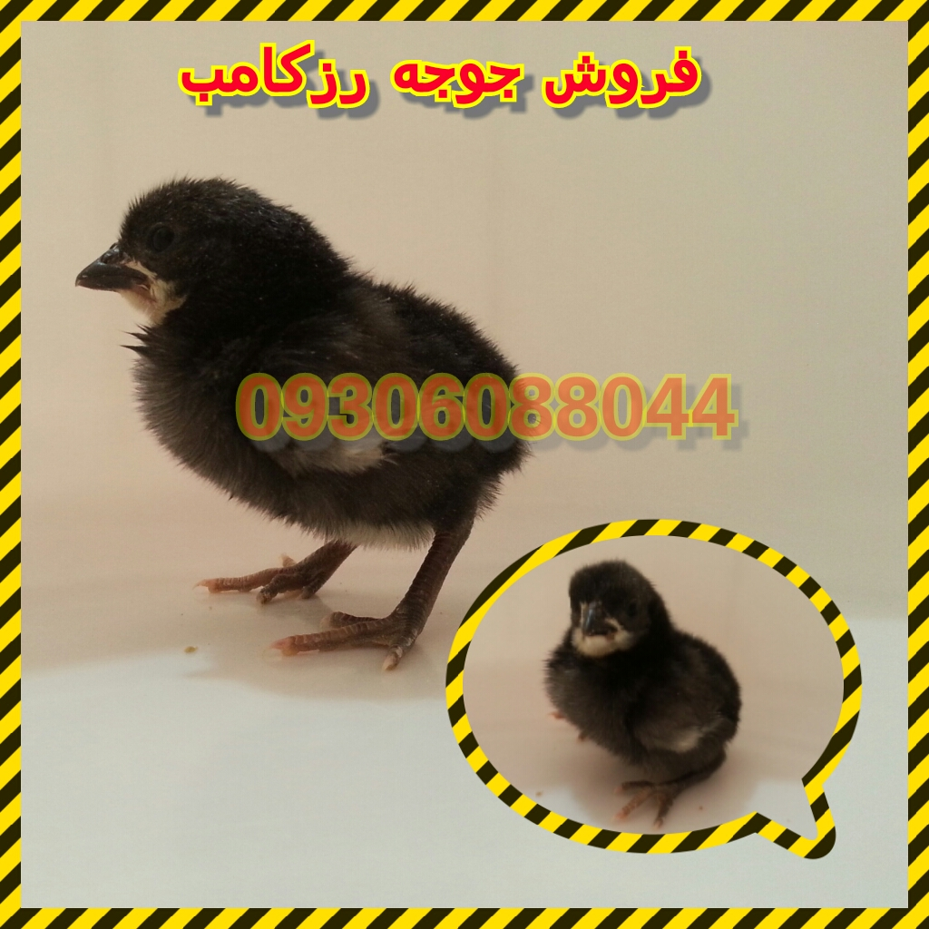 http://uupload.ir/files/zpt7_photogrid_1442125260718.jpg