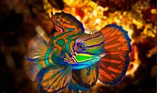 عکس از ماهی اژدهایی آب شور