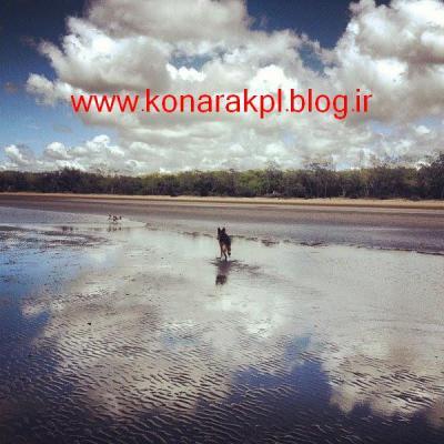 آدرس وبلاگ